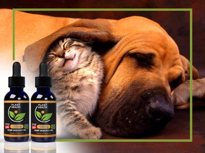 CBD-FOR-PETS-CHANDLER---CBD-FOR-DOGS-CHANDLER---CBD-FOR-CATS-CHANDLER---PET-CBD-CHANDLER